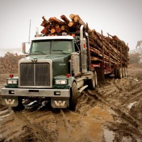 Снижение активности на рынке круглых лесоматериалов