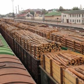 Почему Россия не может отказаться от экспорта круглых лесоматериалов