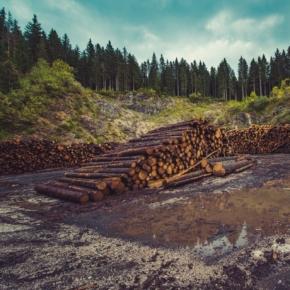 Конъюнктура рынка лесопромышленной продукции в 2019 - 1кв. 2020 г. в России и мире