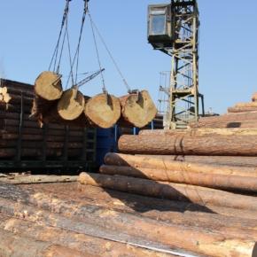Россия продолжает сокращать экспорт круглого леса крупнейшими темпами за последнее десятилетие