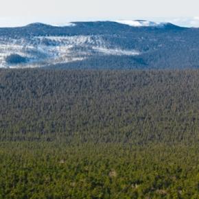 Рослесхоз проверил обязательства аренды лесных участков