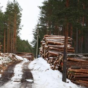 Особенности национальной лесозаготовки