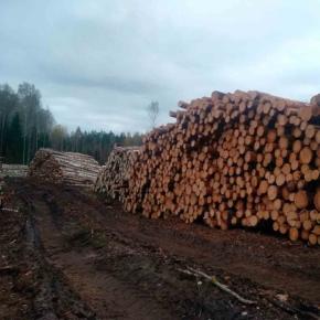 Удмуртлес планирует заняться производством древесных плит