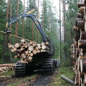 Segezha Group завершила пилотный проект машинного зрения для определения плотного объема леса