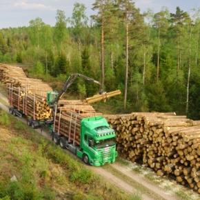Во 2 кв. 2020 г. балансовая древесина в Швеции подешевела на 11,5%