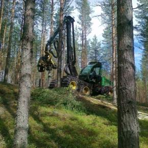 Финляндия сократила объём лесозаготовки в июле 2020 г.