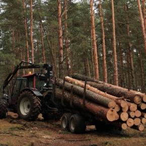 Причины сокращения объёма лесозаготовки в России в 1 пол. 2020 г.