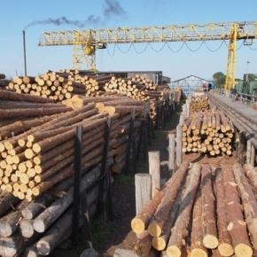 В 1 пол. 2020 г. снижается потребление российского круглого леса за рубежом