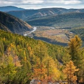 В Забайкальском крае завершили работу по цифровизации лесов