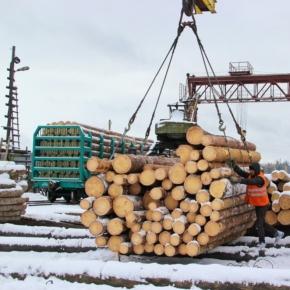 Объемы лесозаготовки могут существенно рухнуть из-за запрета экспорта