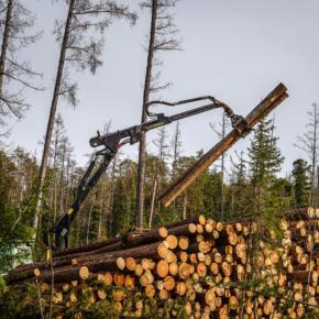 Рослесхоз фиксирует снижение лесозаготовки в стране