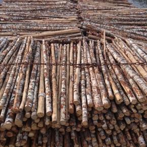 WRI: Россия может продолжить поставки березовых балансов в Финляндию несмотря на запрет экспорта древесины