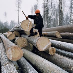 Правительство РФ утвердило правила учета древесины на 2021-2026 гг