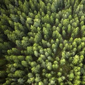 Stora Enso продает лесные участки на юге Швеции