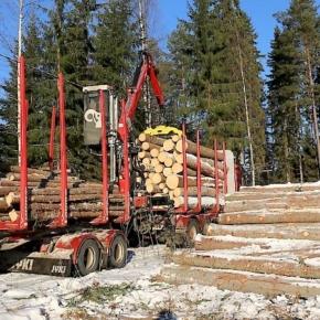 В Финляндии растут цены на круглые лесоматериалы