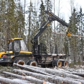 В 2020 г. «Свеза» более чем на треть увеличила площади лесного фонда