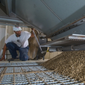 USDA: в 2020 г. США увеличили экспорт пеллет на 5%