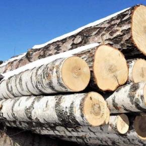 Стабильная цена на фанкряж поддерживает высокий спрос со стороны фанерных заводов