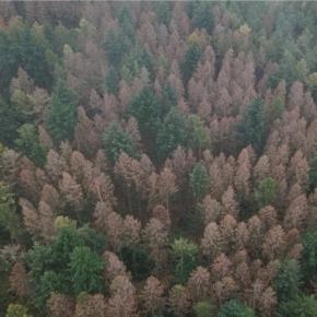Федеральный совет Германииограничит лесозаготовки