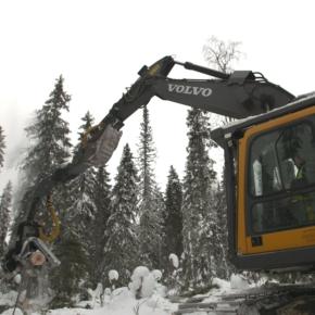 На рынке лесосырья наблюдается повсеместная недозагрузка комбинатов и заводов