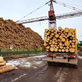 В январе 2021 г. Россия увеличила экспорт круглых лесоматериалов на 30,1%