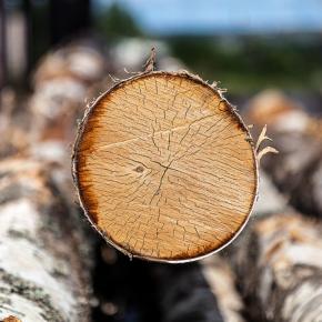 Локальный дефицит березовых балансов на российском рынке лесосырья