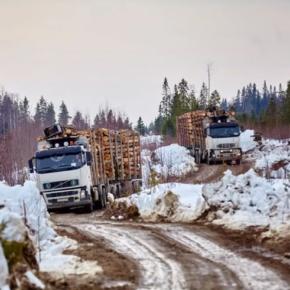 Напряженность на рынке лесосырья в России нарастает в период предстоящей распутицы