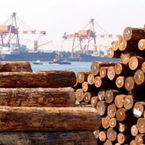 В России к концу 2021 г. создадут госкомпанию по экспорту круглого леса