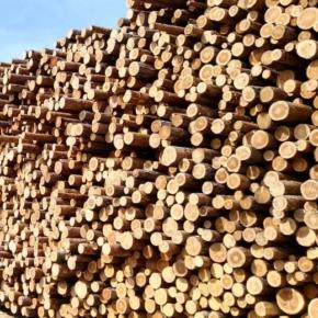 Цены на балансовую древесину и техсырье не растут