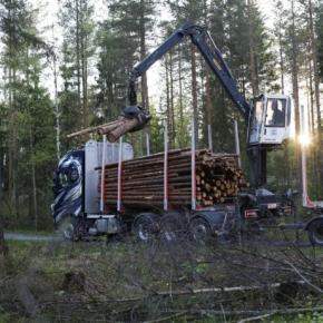 В мае 2021 г. Финляндия увеличила лесозаготовку на 16%