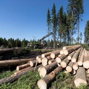 В июне 2021 г. выросли цены на круглый лес в Финляндии