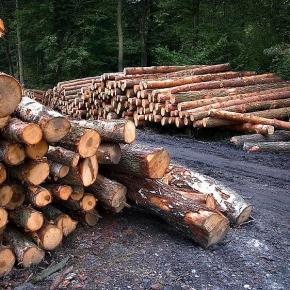Рослесхоз: запрет на экспорт необработанной древесины может коснуться деятельности 4 тыс. организаций