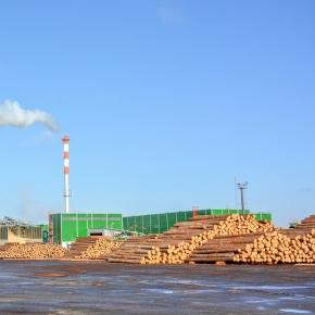 Лесопильные заводы начали понемногу опускать ценник на пиловочник