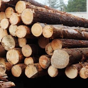 Текущая ситуация на рынке круглых лесоматериалов, возможности и ограничения для отрасли с 2022 г.