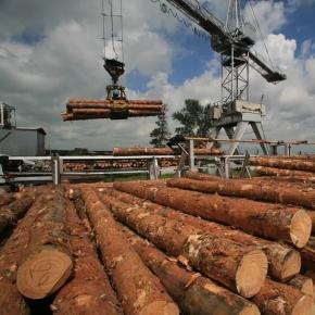 Российские лесопильные заводы вынуждены удерживать цены на пиловочник